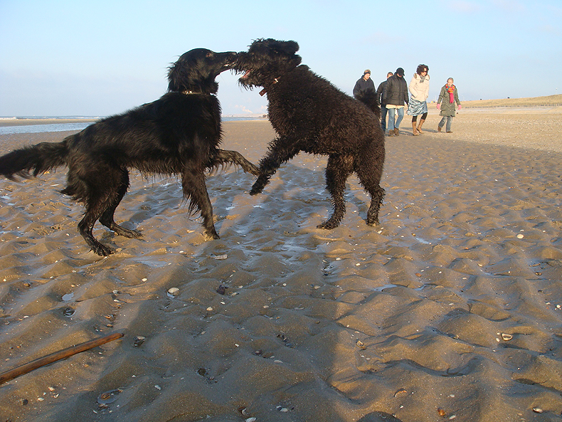 dogs_play_beach.jpg