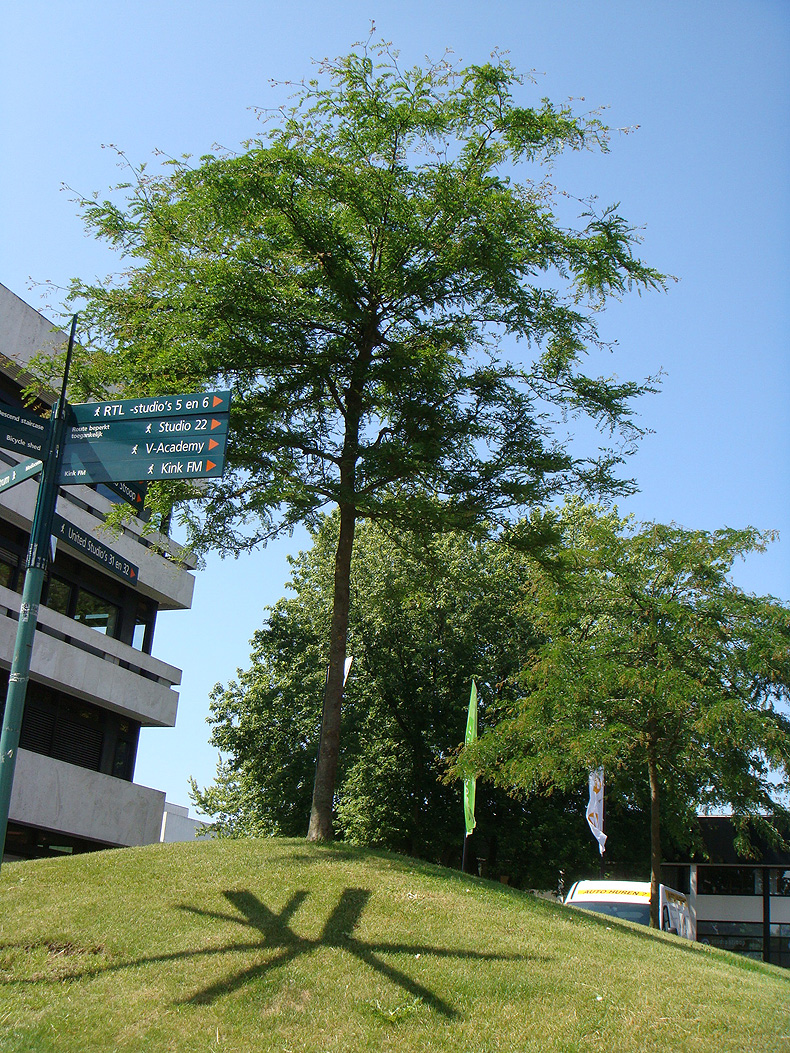 hilversum_shadow_tree.jpg