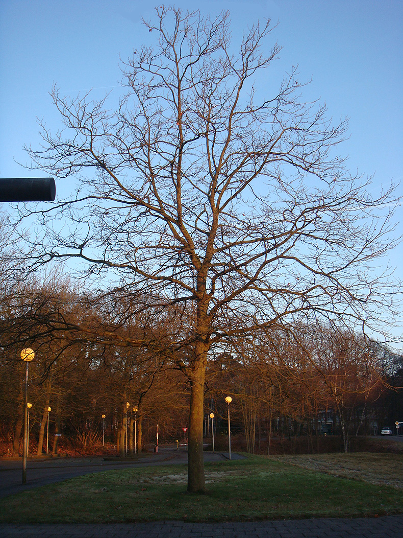 tree_morning_sun1.jpg